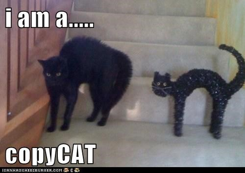 i am a.....  copyCAT
