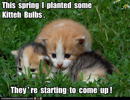 Kitteh Bulbs for your garden in the spring!