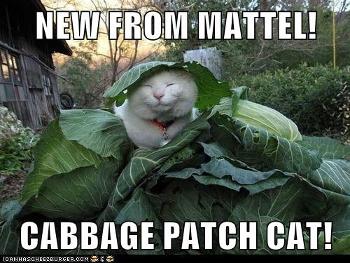 NEW FROM MATTEL!  CABBAGE PATCH CAT!