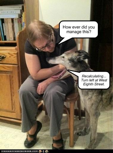gps,directions,eaten,talking dog