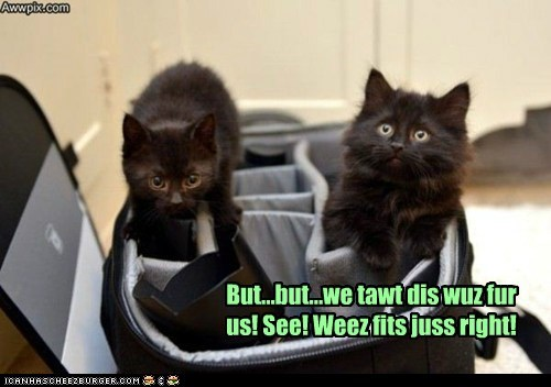 But...but...we tawt dis wuz fur us! See! Weez fits juss right!