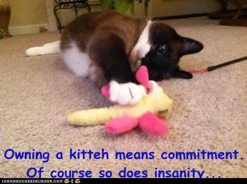 Owning a kitteh means commitment. Of course so does insanity...