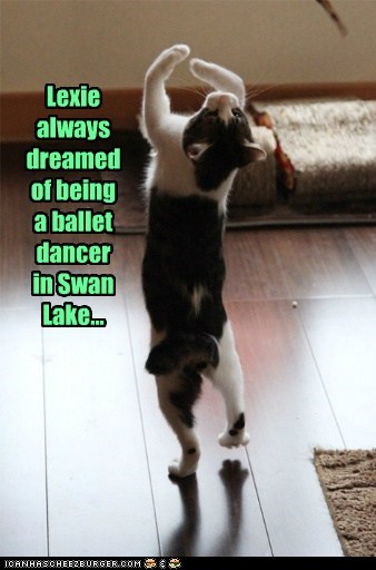Kitties have dreams too