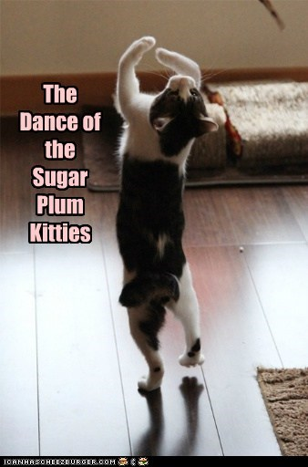 The Dance of the Sugar Plum Kitties