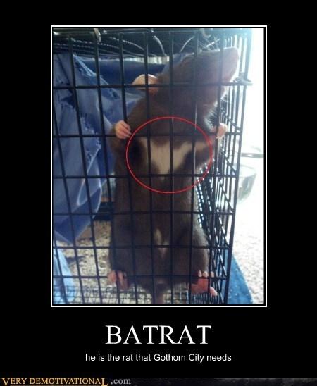 fur,rat,funny,bat