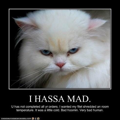 I HASSA MAD.