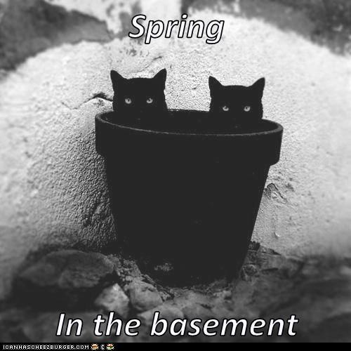 Spring  In the basement