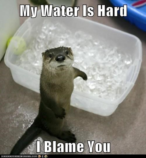 My Water Is Hard  I Blame You