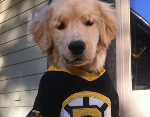 Help This Adorable Blind Pup Drop the Puck for His Favorite Team