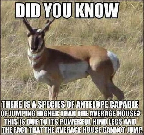 Antelope Can Jump Higher Than the Average House