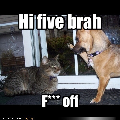 buzzkills,dogs,high five,Cats,funny