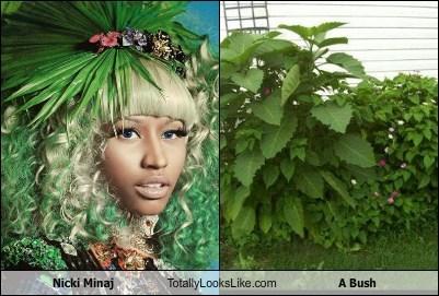 Music,nicki minaj,bushes