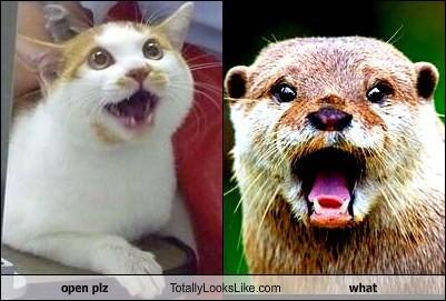 This Cat Totally Looks Like This Otter