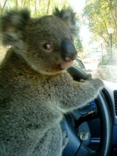 Australian Bus Drivers