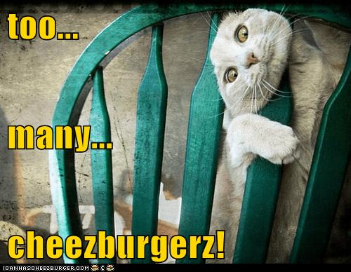 too... many... cheezburgerz!