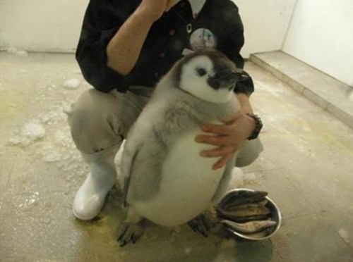 Look at This Cubby Little Penguin