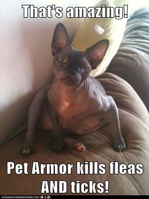 That's amazing!  Pet Armor kills fleas AND ticks!