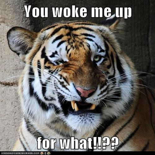 You woke me up  for what!!??