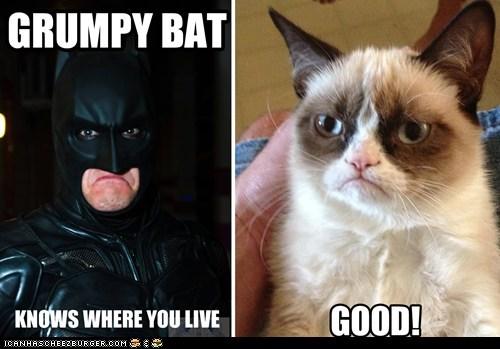 Grumpy Bat