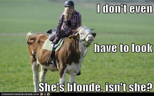 cow,funny,blonde joke,horse
