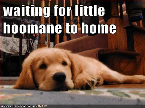 waiting for little hoomane to home