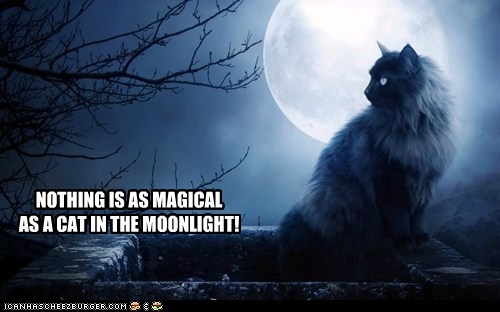 NOTHING IS AS MAGICAL AS A CAT IN THE MOONLIGHT!