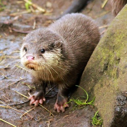Squee Spree Winner: Otter