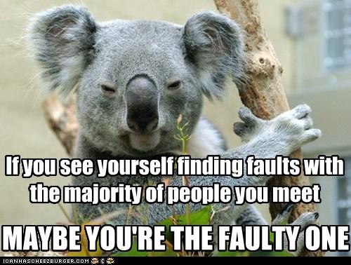faults,koala,wise words