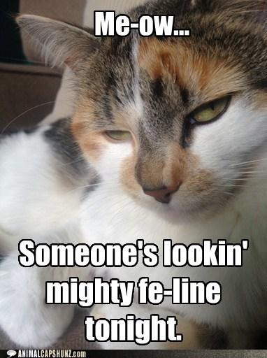 Meow You Doin'?