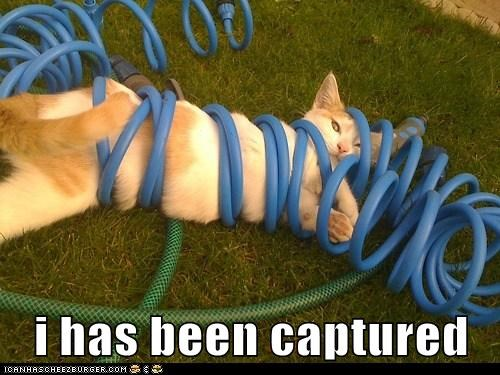 i has been captured