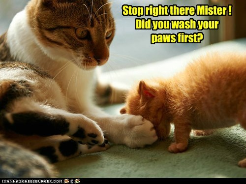 Stop right there Mister ! Did you wash your paws first?