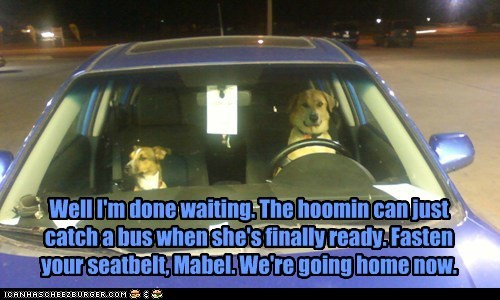 Well I'm done waiting. The hoomin can just catch a bus when she's finally ready. Fasten your seatbelt, Mabel. We're going home now.