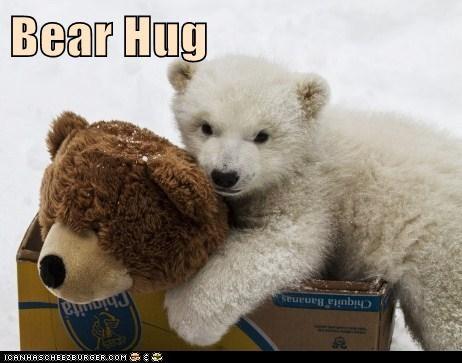 teddy bear,polar bear,cub,cute,bear hug