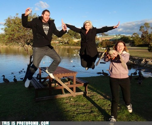 photobomb,duck,funny,jumping
