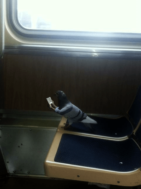 This Looks Shopped of the Day: A Pigeon Reading on Kindle on a Train