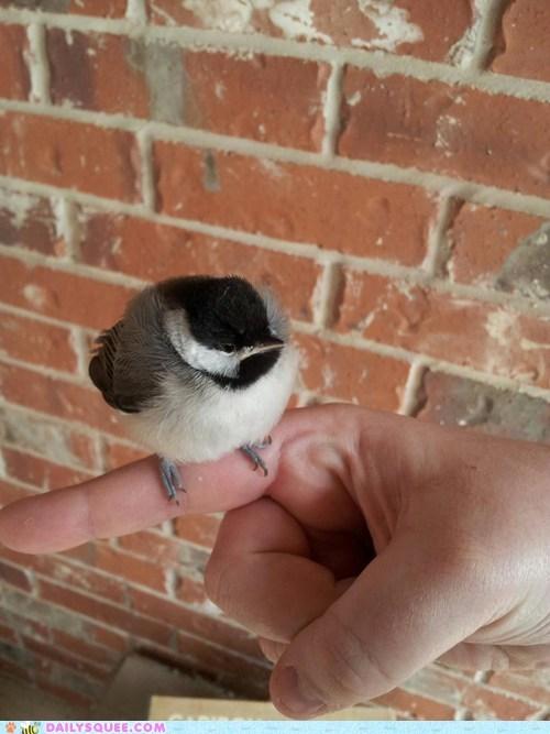 Tiny Puffball!