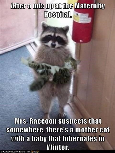 After a mix up at the Maternity Hospital,  Mrs. Raccoon suspects that somewhere, there's a mother cat with a baby that hibernates in Winter.