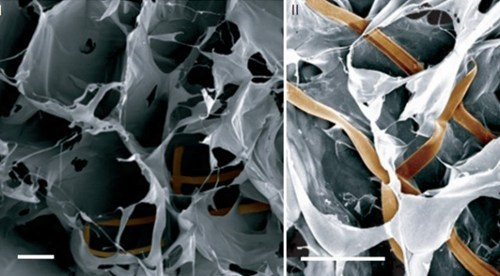 Harvard Creates First Cyborg Tissue!