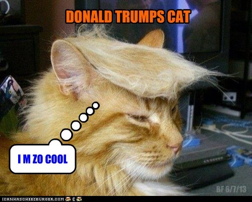 DONALD TRUMPS CAT