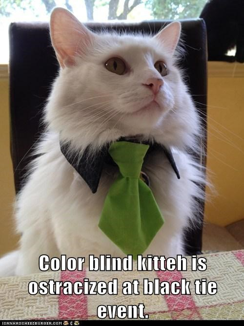 Color blind kitteh is ostracized at black tie event.