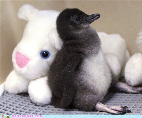 Two-week-old Little Penguin at the Cincinnati Zoo