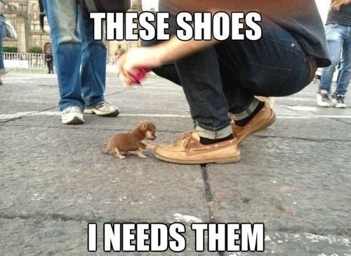 shoes,puppy,tiny,fabulous,funny