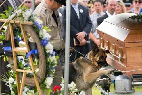 Police Dog Says Good Bye to Partner