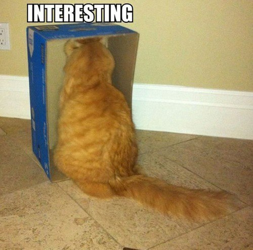 Funny Cat Picture Thread! - Page 3 HF813DC51