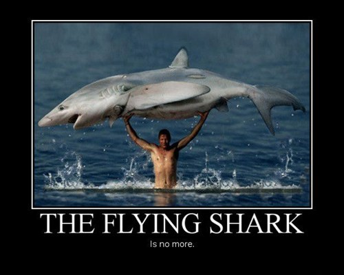 He Caught the Flying Shark?
