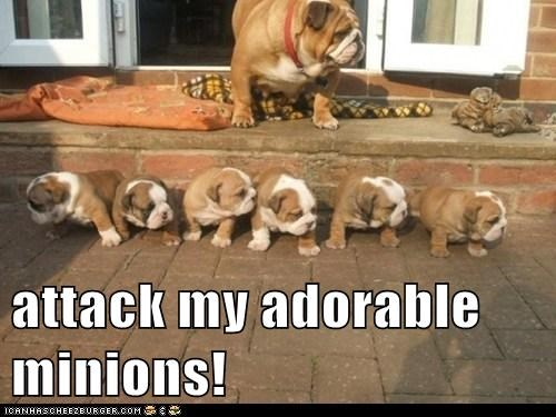 attack my adorable minions!
