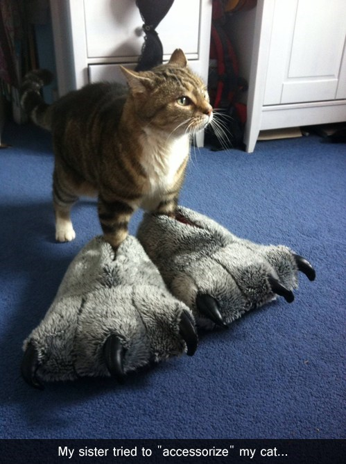Paw Enhancement Is All the Rage