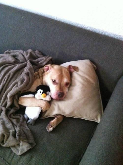 stuffed animal,good night,cute,sleep