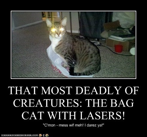 THAT MOST DEADLY OF CREATURES: THE BAG CAT WITH LASERS!