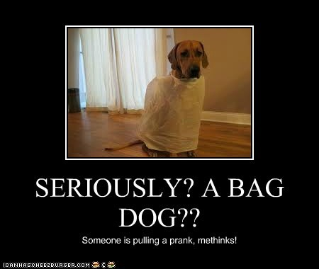 SERIOUSLY? A BAG DOG??